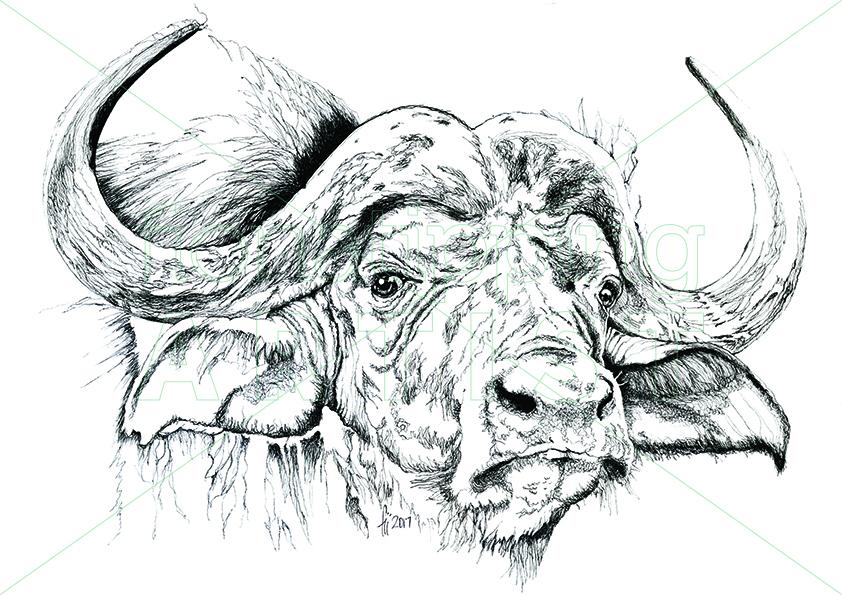 Buffalo1WEBSITE